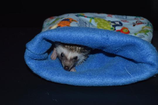 blue.pirates.hedgehogs.sleeping.bag_-1